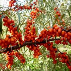 Ботаническая ароматная
